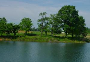 Fishing - Meadow Brook Game Farm