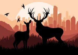 Hunting Deer in Tennessee